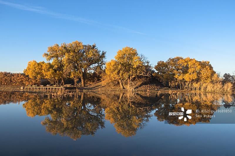 二道河 湖 胡杨林 秋天 著名景点 树 风光 反射 风景 旅游目的地 内蒙