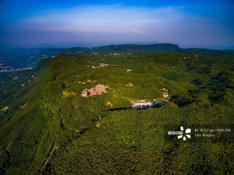 省 树 森林 宜宾 户外 竹林 亚洲 自然 植物图片