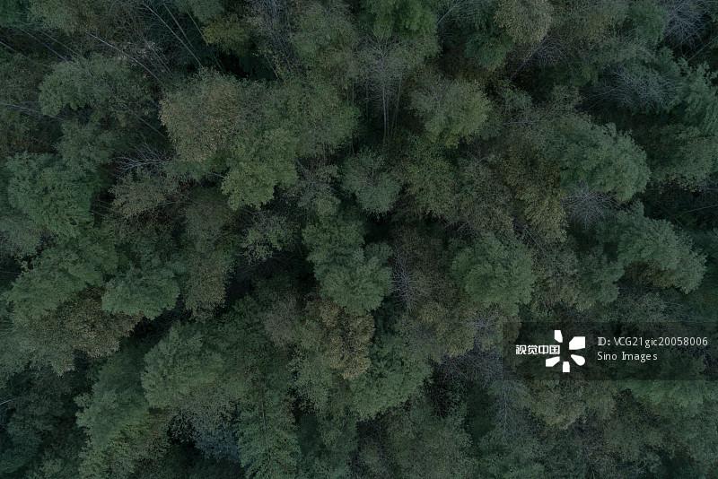 树 宜宾 无人 竹林 四川省 森林 枝繁叶茂 自然 竹子图片