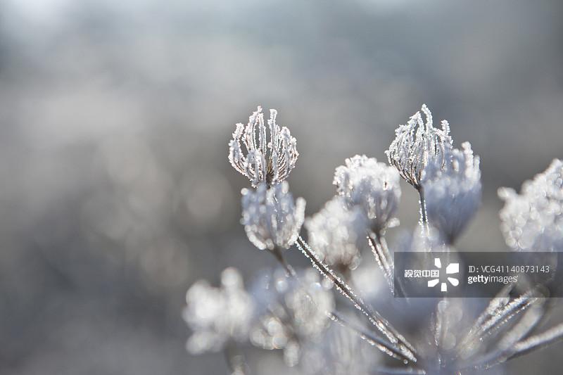 旅行 脆弱 霜降 寒冷