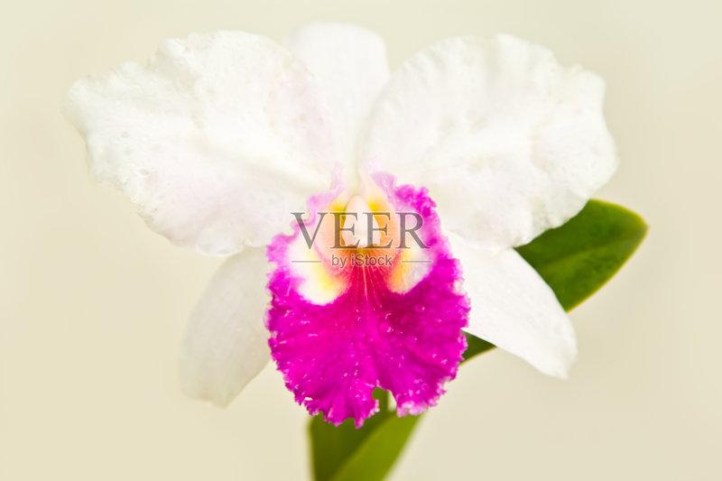 清新 紫色 花朵 色彩鲜艳