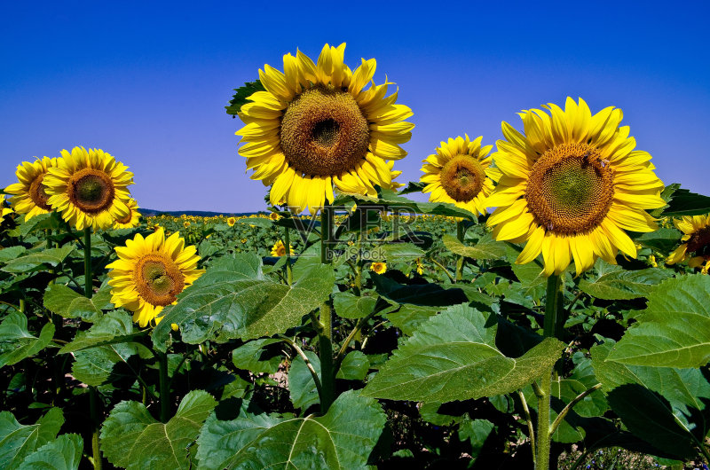 园艺 多色的 花朵