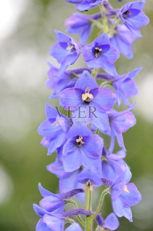 紫色 组物体 花朵 户外