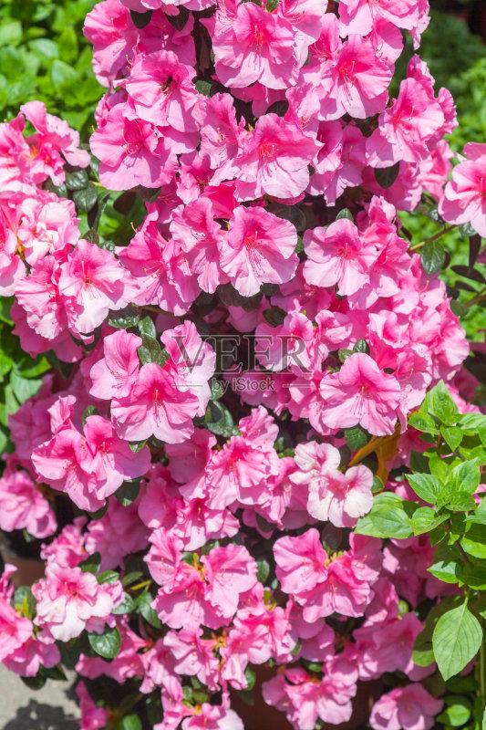 花卉- 紫色 背景 花朵 户外 园林