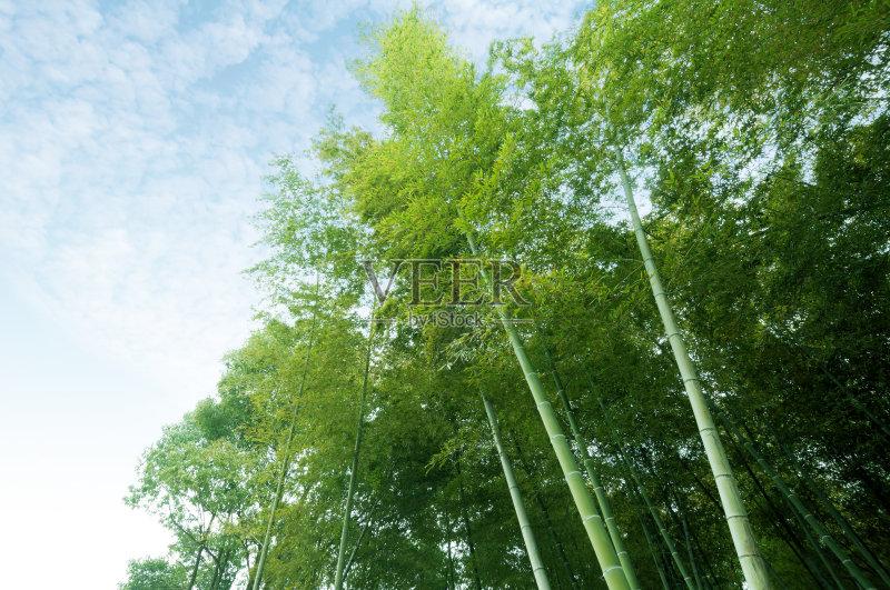 色 美 公园 风水 竹 活力 枝繁叶茂 无人 棍 日光 宁静图片