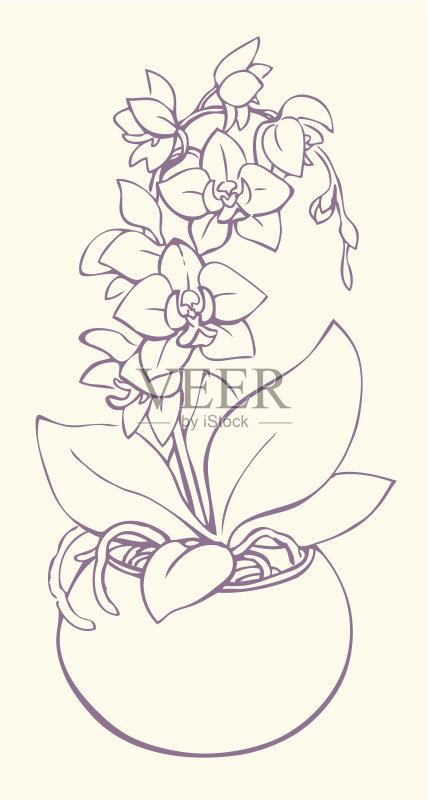 铅笔画 兰花 高雅 花盆 轮廓 叶子 花蕾 植物 符号 仅一朵花 花瓶 枝 自然