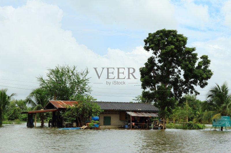 水灾 无人 泰国 撤退 损失 树