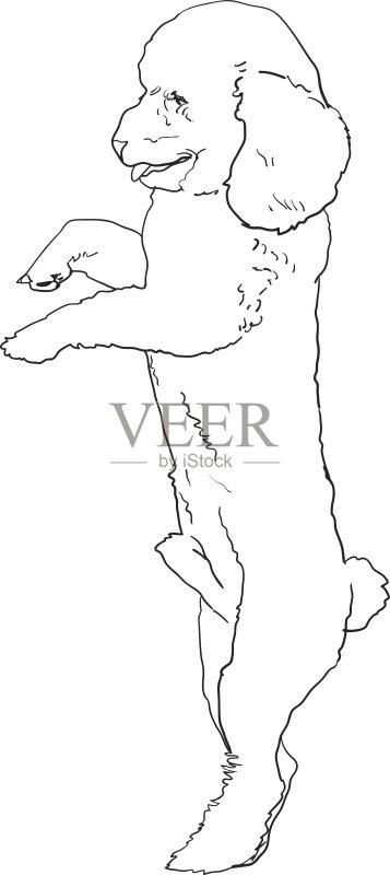 狗 动物毛发 草图 小的 哺乳纲 矢量 纯种犬 小狗 痕迹