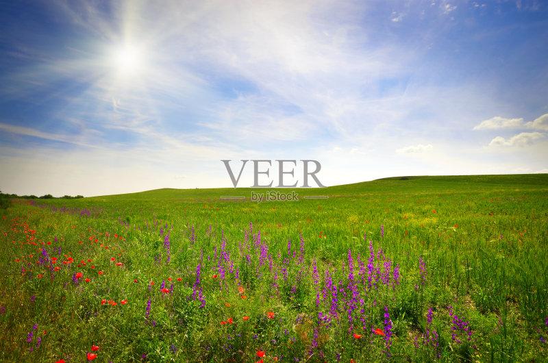 田野-草地 陆地 晴朗 明亮 天空 太阳 甘菊花 白昼 地形 云 草 云景 户外