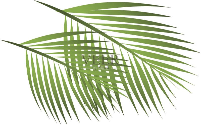 矢量 棕榈叶 计算机制图 剪贴画 白色背景 度假