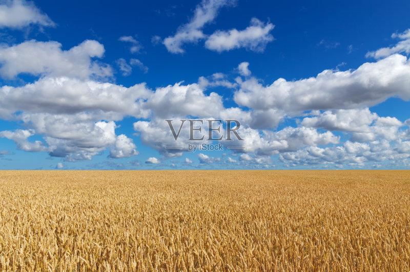麦田-谷类 草地 生长 环境 明亮 植物 小麦 北欧 天空 裸麦 自然 景观设计
