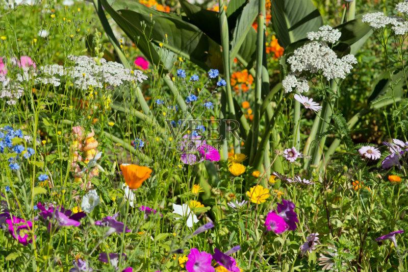 花草-草地 大量物体 多样 绿色 白色 公园 红色 植物 花坛 花头 夏天 自然