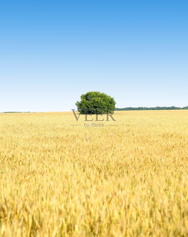 麦田-巨大的 草地 陆地 宽的 田园风光 叶子 夏天 自然 黄色 无人 力量