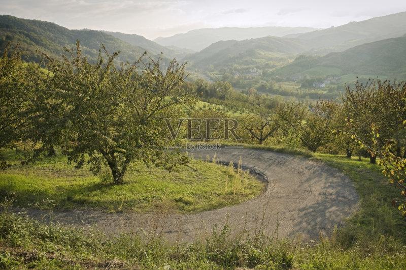景观设计 农业 樱桃树 单行道 地形 弯曲 季节 草 雾 户外 果园 已经垦图片