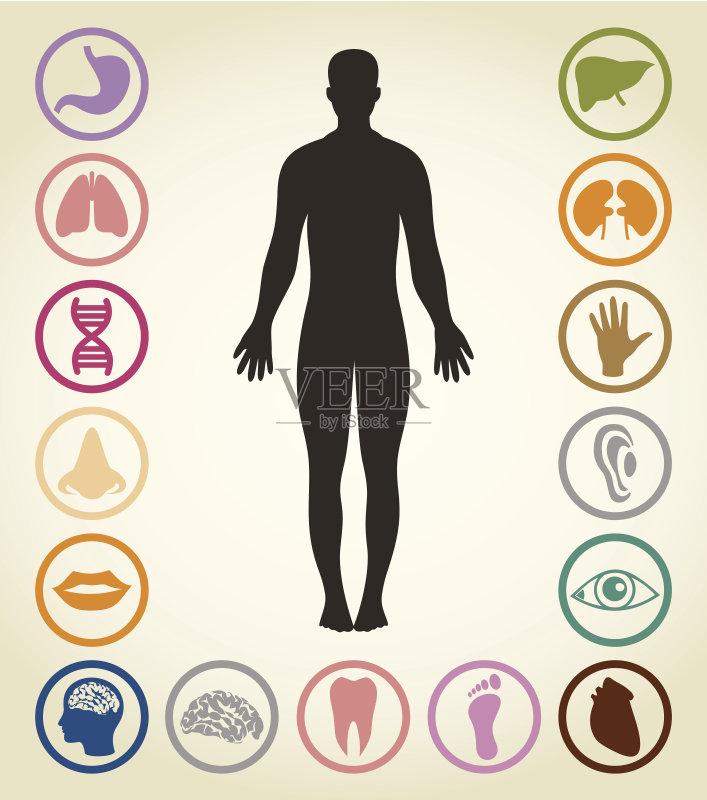人的头部 男性形象 手 胃 人的鼻子 科学 人类形象 人体内脏器官 人体