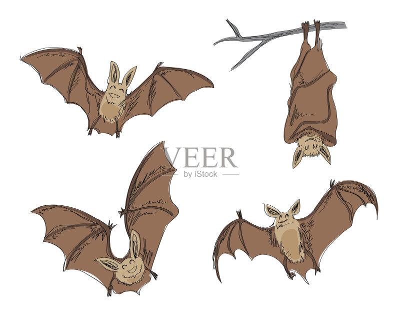 铅笔画 万圣节 设计 绘画插图 卡通 式样 动物 画画 设计元素 蝙蝠 飞 草