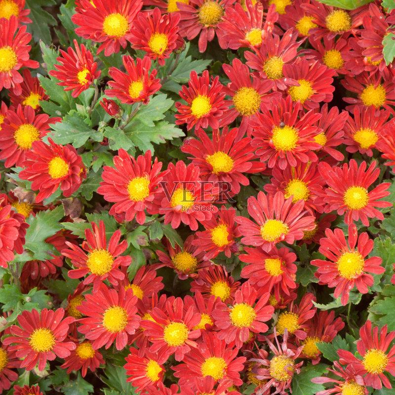 白昼 毛圈布 花卉商 脆弱 礼物 粉色 上升 多色的 户外