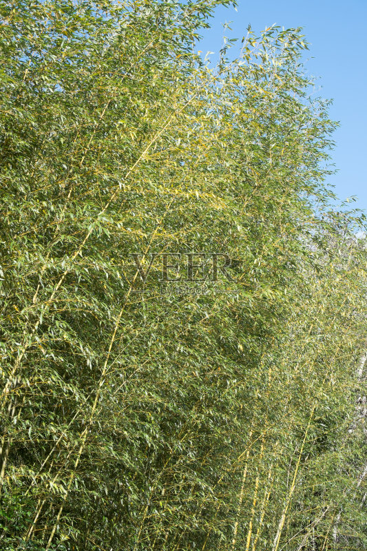 外 色彩鲜艳 风水 自然美 森林 植物学 绿色 美 竹 枝繁叶茂 无人 热带图片