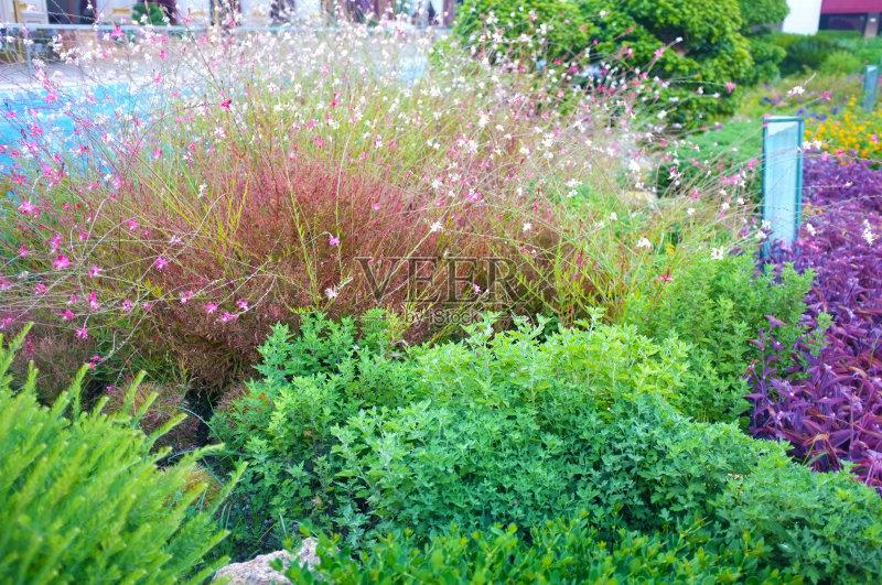 花园-设计 生长 环境 整齐的 灌木 植物 花坛 自然 景观设计 装饰 旅行