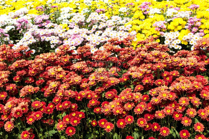 黄色 白昼 花卉商 脆弱 礼物 粉色 毛圈布 上升 多色的 背景 户外