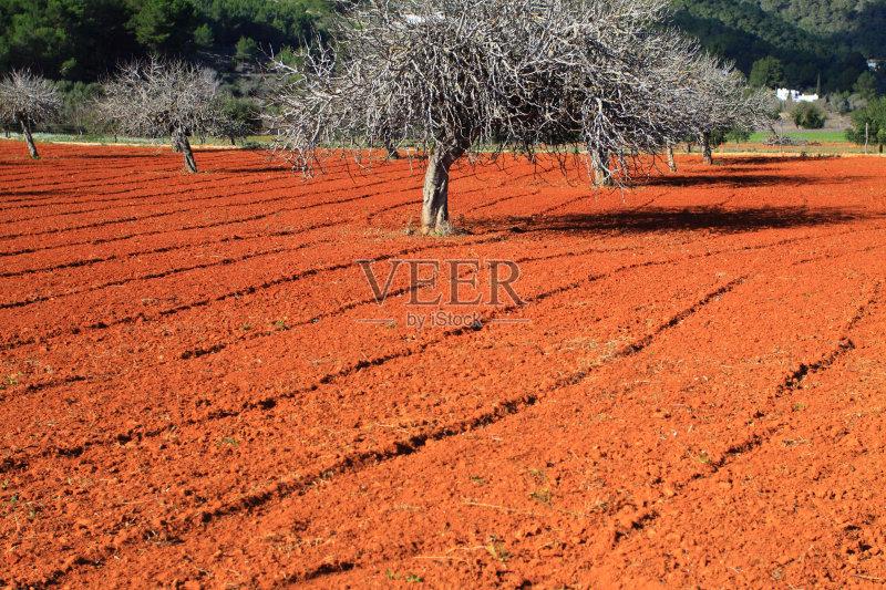英亩 农舍 田地 已经垦殖的土地 田园风光 橙色 农场 无人 褐色
