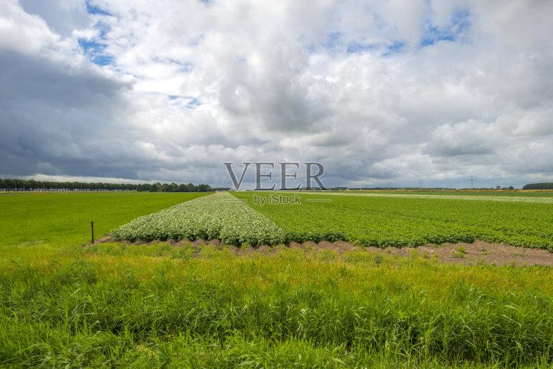 田野-芦苇 生长 风轮机 天空 自然 景观设计 马铃薯 农业 风力 地形 季节