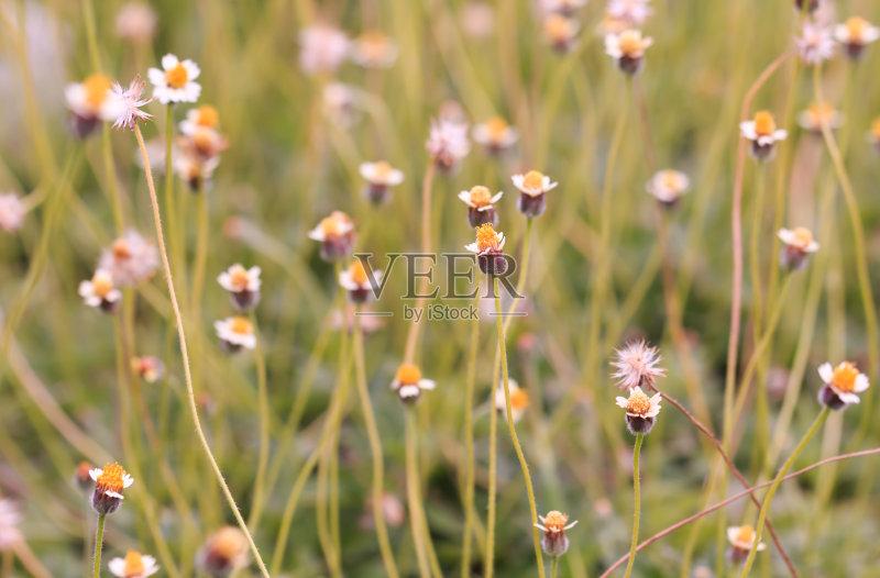 花草-草地 自然美 田地 大量物体 植物 花坛 式样 春天 自然 黄色 平原