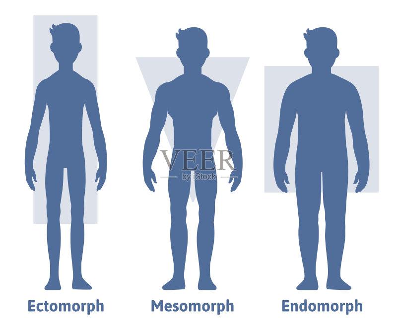 信息图表 男性形象 比例 站 男性 举重训练 高个子 运动 完美 塑形 人类