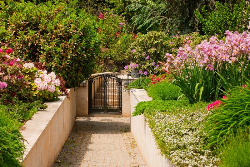 花园-生长 植物学 绿色 叶子 公园 植物 花头 夏天 自然 景观设计 花卉商