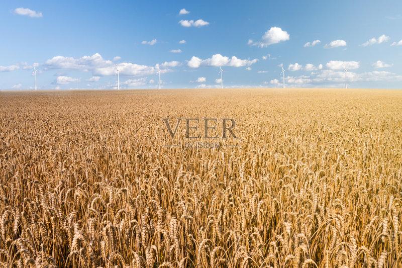 麦田-谷类 工厂 生长 环境 风轮机 植物 小麦 单一栽培 太阳 自然 黄色