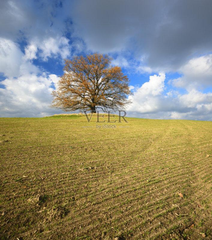 田野-巨大的 泥土 秋天 生长 环境 山 叶子 积雨云 植物 暴风雨 乌云 一棵