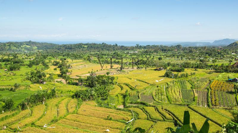 田野-陆地 生长 有机农庄 田园风光 有机食品 山 式样 印度尼西亚 稻田