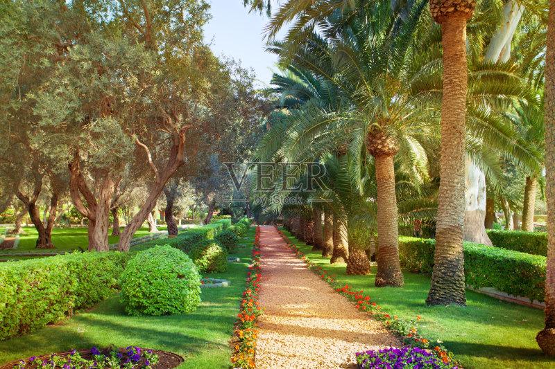 花园-陆地 旅途 植物 探险 天空 棕榈树 宗教 中东 旅行 宏伟 户外 旅游