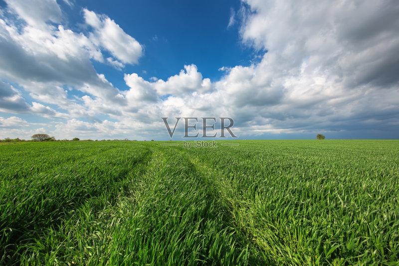 田野-草地 陆地 环境 晴朗 植物 天空 太阳 自然 景观设计 白昼 农业 地形