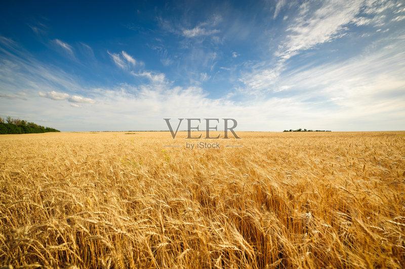 麦田-秋天 谷类 陆地 生长 山 植物 小麦 天空 自然 黄色 熟的 农业 地形