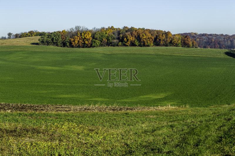 外 色彩鲜艳 田地 森林 已经垦殖的土地 绿色 田园风光 牧场