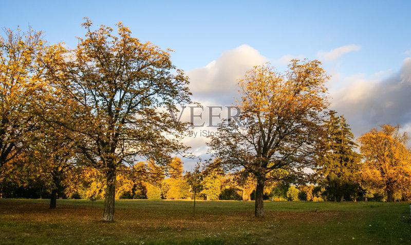稀缺 树 风景 多色的 度假图片
