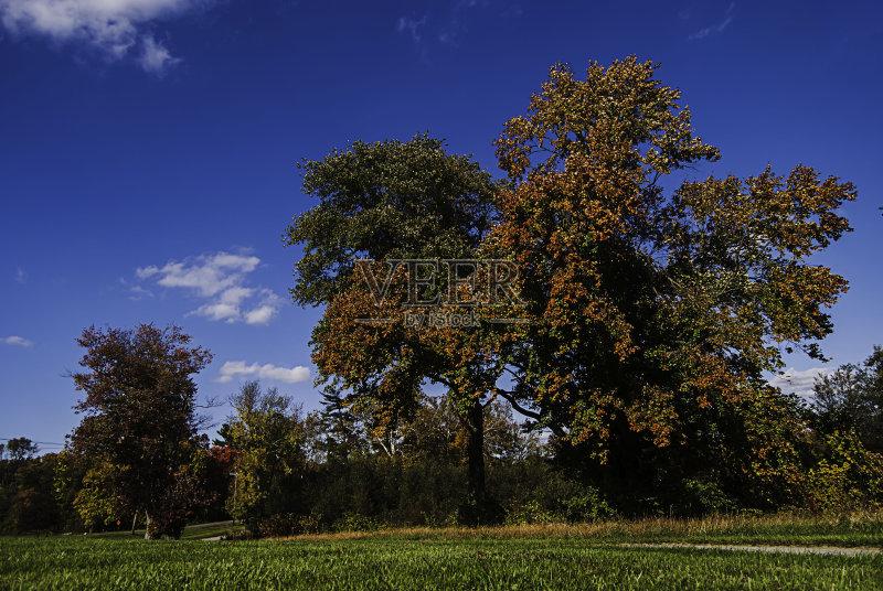 年 树 自然 景观设计 户外图片