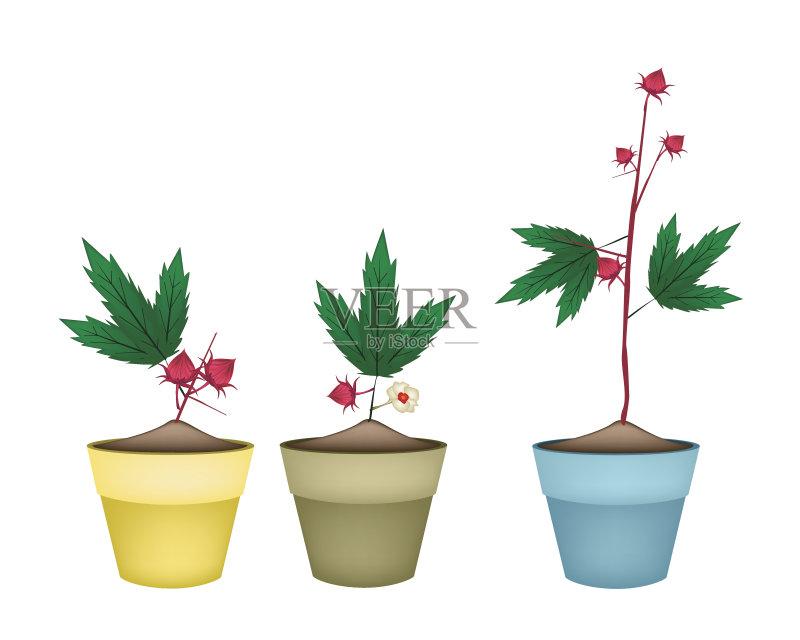 盆栽植物 枝繁叶茂 2015年 赤土陶器 生活方式 矢量 红草鹦鹉 剪贴画