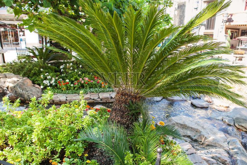 花园-巴西 森林 生长 叶子 植物 夏天 自然 白昼 无人 2015年 岛 季候风