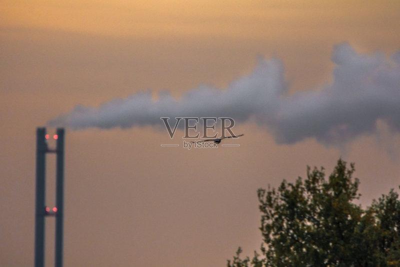 回家-尼康 欧洲秃鹰 日落 日出 与摄影有关的场景 焚化炉 自然 触摸 地