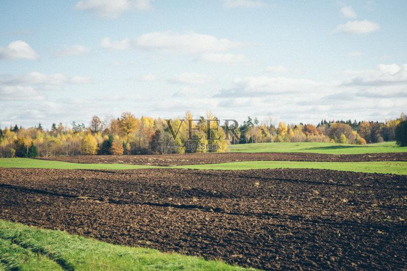 田野-巨大的 草地 陆地 森林 生长 植物学 环境 叶子 夏天 自然 枝 无人
