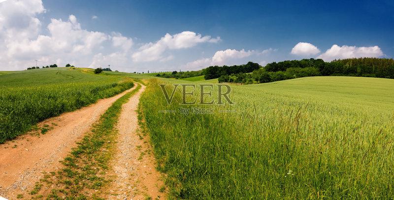 田野-草地 森林 田园风光 天气 明亮 公园 光 春天 蓝色 夏天 太阳 自然