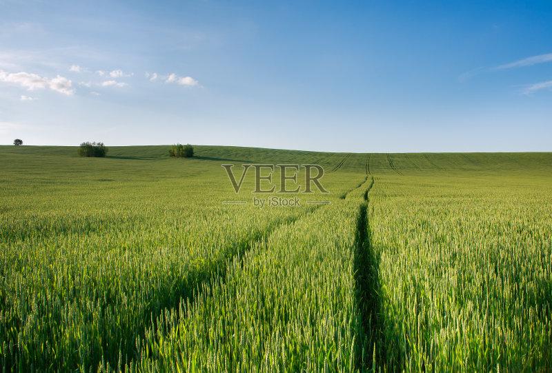 田野-谷类 草地 陆地 生长 环境 山 植物 小麦 天空 自然 景观设计 农业