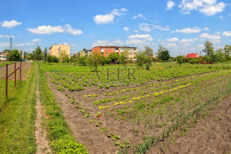 业 床 户外 田地 已经垦殖的土地 绿色 田园风光 蔬菜 有机食品 秧苗