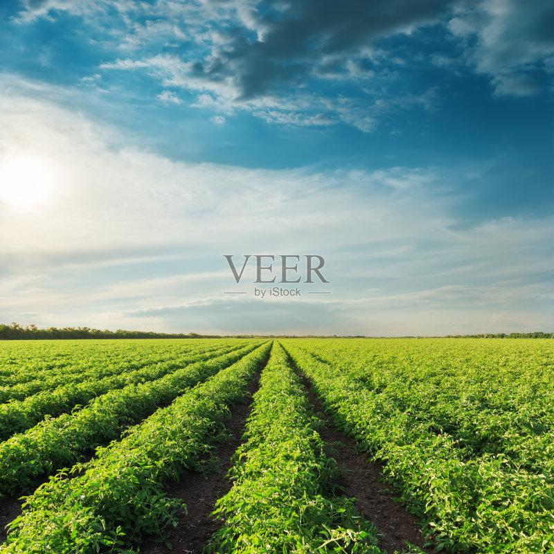 田野-草地 陆地 清新 文化 生长 成一排 农场 植物 菜园 太阳 自然 景观设