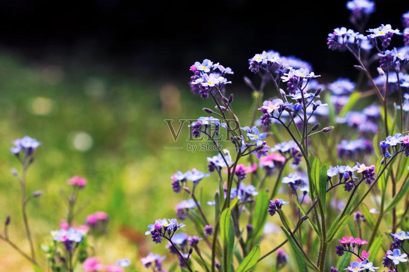 夏天 无人 花卉商 日光 花 清新 阳光光束