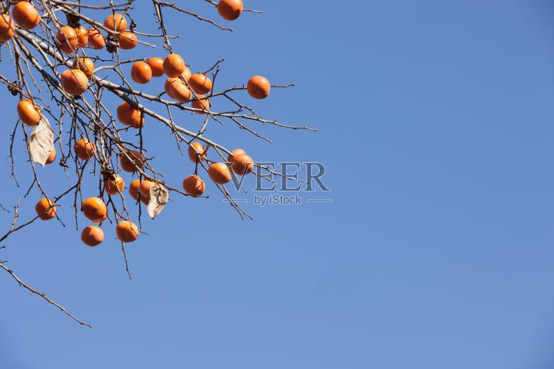 秋天 水果 柿子树 地形 植物 树 朝鲜半岛 悬挂的 自然 收获 首尔 户外