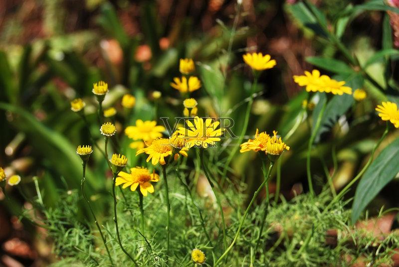 花草-草地 田地 野花 绿色 田园风光 美 植物 花头 牧场 自然 黄色 无人