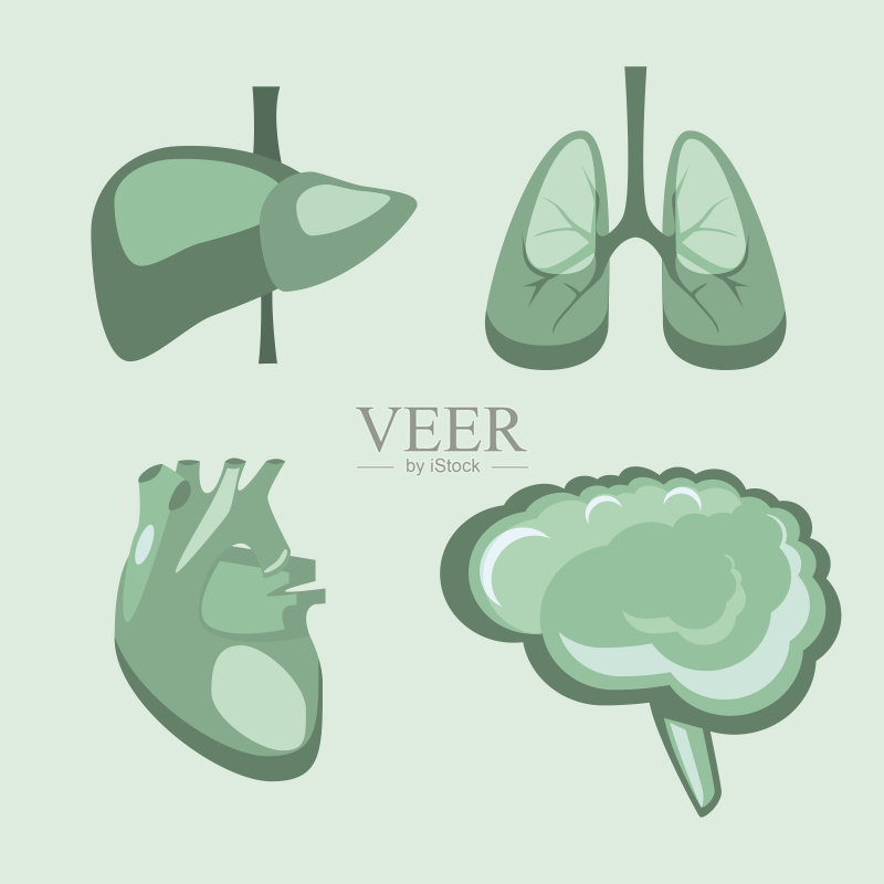 学 神经外科 剪贴画 背景 人类肺脏 人体内脏器官 生物学 人类心脏 肝
